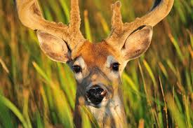 protect bird feeders from deer keep deer away