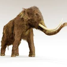 extinction woolly mammoth science technology
