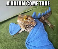sareptiles view topic some of my favorite memes