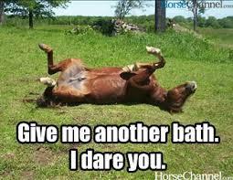Meme Horse - bath jpg