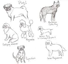 baby pug coloring pages litle pups