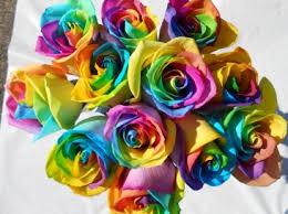 multi colored roses rainbow roses in allen park mi blossoms florist