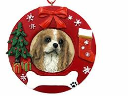 e s pets king charles cavalier personalized