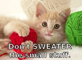 Flying Cat Meme - dont sweater the small stuff instadebit casino cat meme kid 101