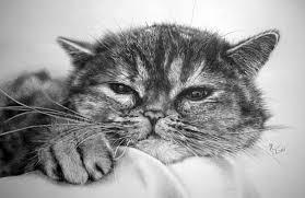 imagenes a lapiz de gatos los increíbles dibujos hiperrealistas de gatos hechos a lápiz por