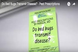 Why Do Bed Bugs Come Out At Night Where Do Bed Bugs Come From Identify Bed Bugs Info