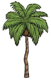 tree palm tree don t starve wiki fandom powered by wikia