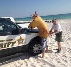 Horse Head Meme - man in horse head arrested beach team jimmy joe