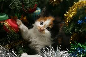download wallpaper kitty face spotted tree christmas
