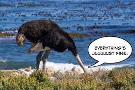Ostrich Meme - running ostrich meme