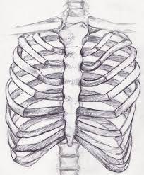 drawn skeleton rib pencil and in color drawn skeleton rib