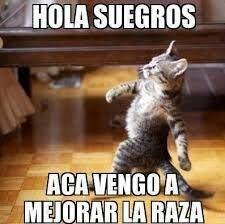 Spanish Memes - cat memes in spanish
