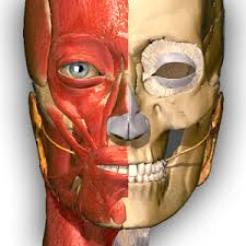 Google Human Anatomy Anatomy Learning 3d Atlas Android Apps On Google Play