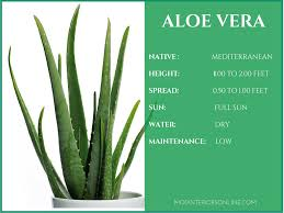 best house plants best houseplants for your home promoting clean air and healthy