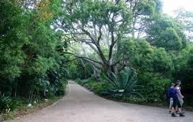 Kirstenbosch National Botanical Gardens by Kirstenbosch National Botanical Garden