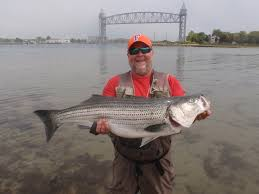 barnett tangles with 30 pound stripers at cape cod central