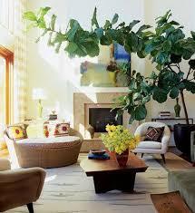 good inside plants good houseplant for bedroom glif org