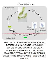 Life Cycle Of A Flowering Plant - view teaching guide teach together community for shs