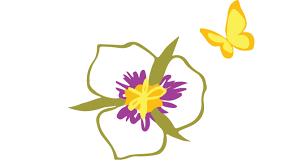 contact u2014 mariposa montessori