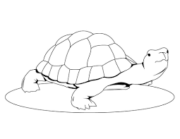 coloring page turtle cute cartoon turtle coloring page with cute turtle coloring pages
