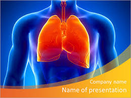 powerpoint design lungs human lungs and male anatomy powerpoint template backgrounds id