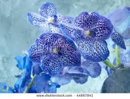 Blue Orchids Blue Orchids Artistic Version Stock Illustration 44667841