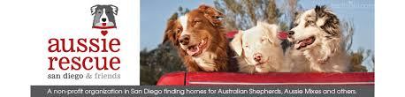 australian shepherd los angeles rescue copy copy cropped aussie rescue main header22 jpg