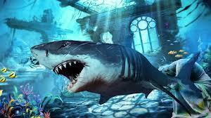 shark apk blue whale 2017 angry shark world 1 0 apk androidappsapk co