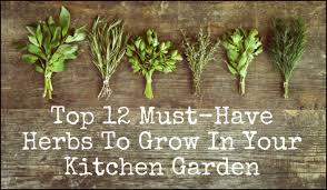herb gardens 12 must have herbs to grow in your kitchen garden