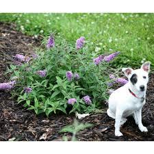 low light outdoor plants drought tolerant perennials garden plants u0026 flowers the home