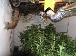 marijuana grow room setup growing organic marijuana growing