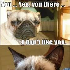 Grumpy Dog Meme - grumpy dog vs grumpy cat take 2 by mortisha411 meme center