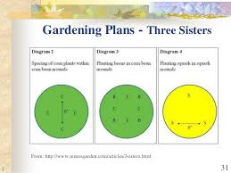 Companion Garden Layout Companion Planting The Real Story Montgomery County Master Gardene