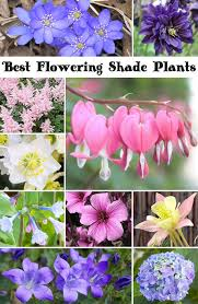10 best flowering shade plants plants gardens and purpose