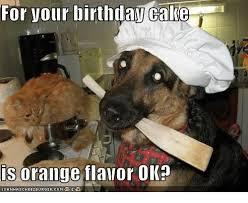 Birthday Cake Dog Meme - 20 happy birthday husband memes of all time love brainy quote