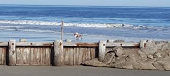 island sc real estate pawleys island homes for sale