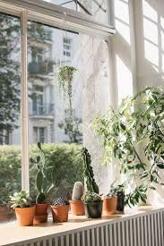 1521 best indoor plants ideas images on pinterest indoor plants