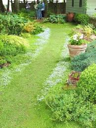 Backyard Ground Cover Options 33 Best Groundcover Images On Pinterest Ground Covering Garden