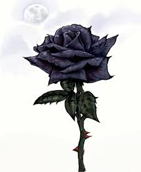 33 best black roses images on pinterest nature black and botany