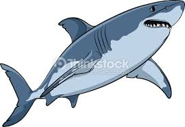 vector drawing of a great white shark vector art thinkstock