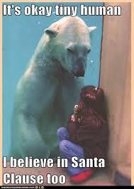 Funny Bear Memes - funny fun lol hilarious bear animals memes pics images photos
