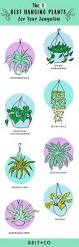 the 25 best hanging ferns ideas on pinterest string garden