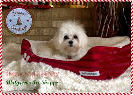 top five christmas present ideas for your favorite pet or someone