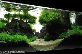 Aquarium Aquascapes Planted Tank The Lane By Serkan Cetinkol Aquarium Design Contest