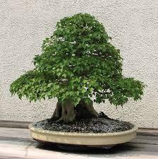 best 25 miniature trees ideas on mini umbrella