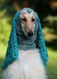 afghan hound puppies ohio males kasban afghan hounds the afghan hound pinterest