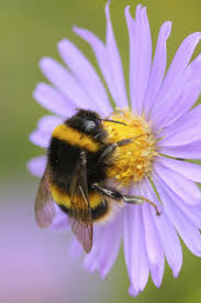 bumblebees push away newcomers who try to learn from them wired uk