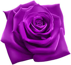purple roses purple png clipart image gallery yopriceville high