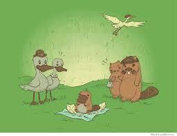 Platypus Meme - duck billed platypus comic memes pinterest duck billed