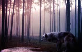 imagenes de fondo de pantalla lobos fondo escritorio lobo en bosque